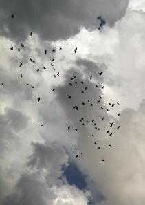 Bird Fall MGD©