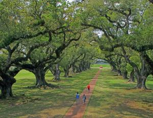 A Walk Through the Live Oaks
