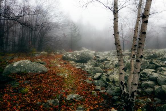 rocks and fog