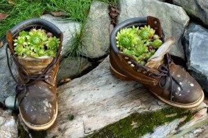 cactus shoe