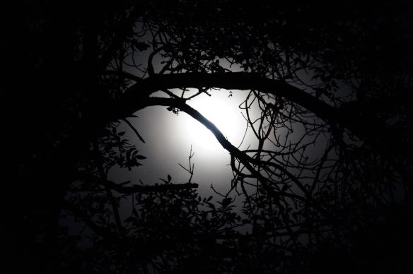 moon-through-trees