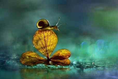 bokeh-snail-photography-1