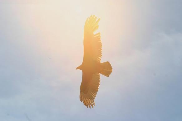 vulturesun