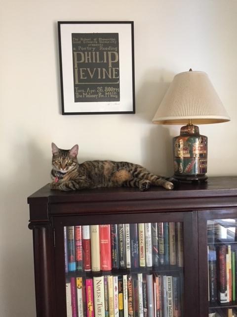 Literary Cat